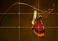 rule-of-thirds-example-one-butterfly-eyes