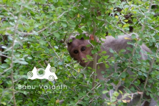 hiding monkey in thiruparankundram hill