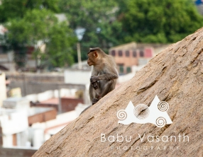 monkey in thiruparankundram hill