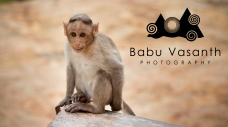 thiruparankundram monkey