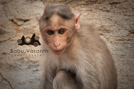 youth monkey in in thiruparankundram hill